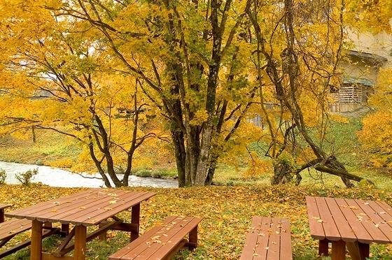 秋の庭園から間近に見れる色づいた木々は自慢の景色