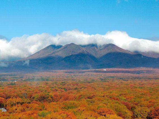 紅葉シーズンには、色鮮やかな紅の絨毯が見下ろせる