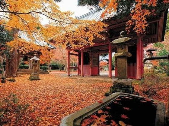 晩秋の隠れた名刹・小松寺は、京都嵯峨野の風情