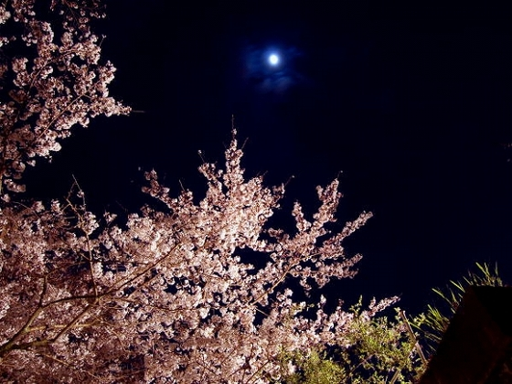春には桜が咲き