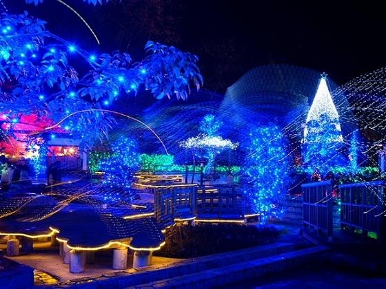 クリスマスシーズンは万葉公園がイルミネーション (画像提供:湯河原町)