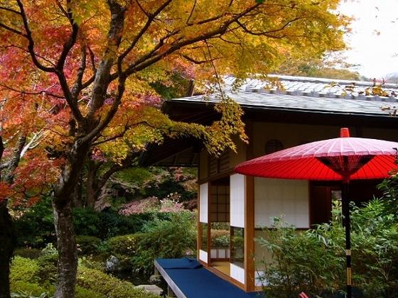 池峯もみじの郷では、紅葉と風雅なお茶席をお楽しめます。 (画像提供:湯河原町)