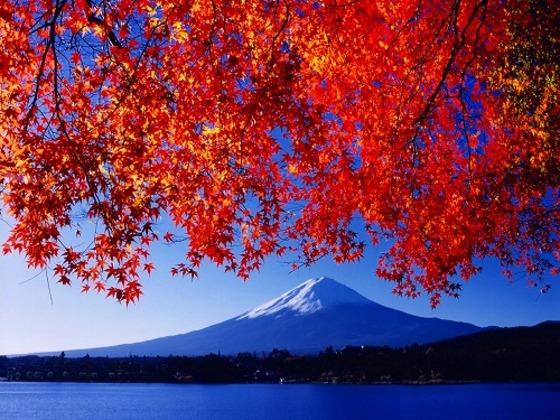 紅葉と富士山 10月下旬~11月中旬は紅葉まつり開催♪