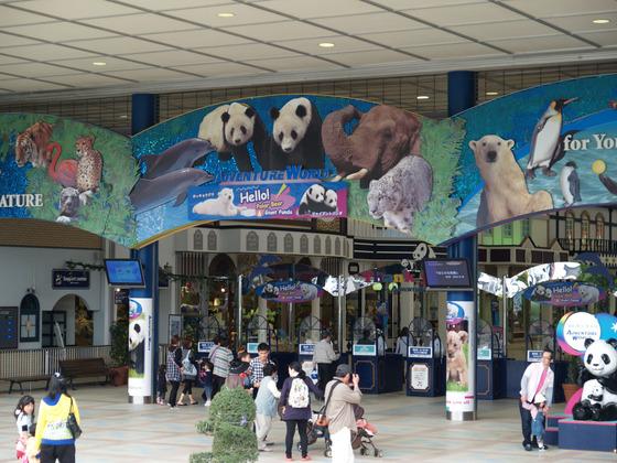 たくさんのパンダ達がいるアドベンチャーワールド