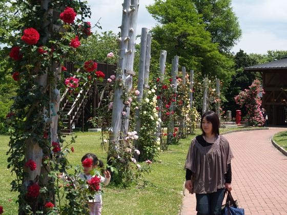四季折々のお花が咲く平草原公園