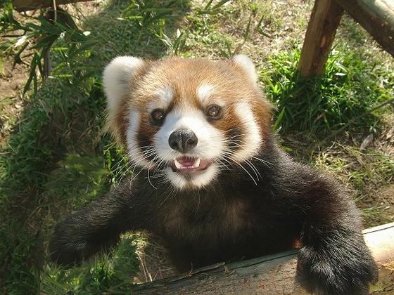 みんな大好きな動物園も、園内無料シャトルバスでホテルからすぐ