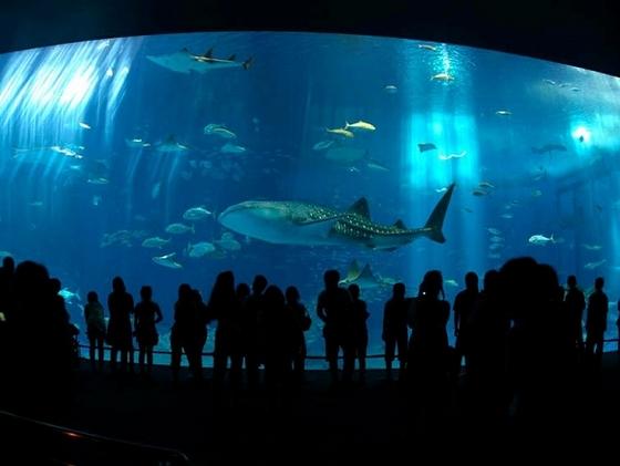 沖縄美(ちゅ)ら海水族館まで車で50分