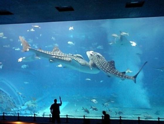 沖縄美ら海水族館(海洋博公園内)徒歩圏