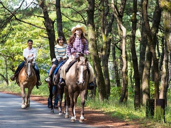 黒松林の中をお馬さんと行く乗馬に挑戦しよう!