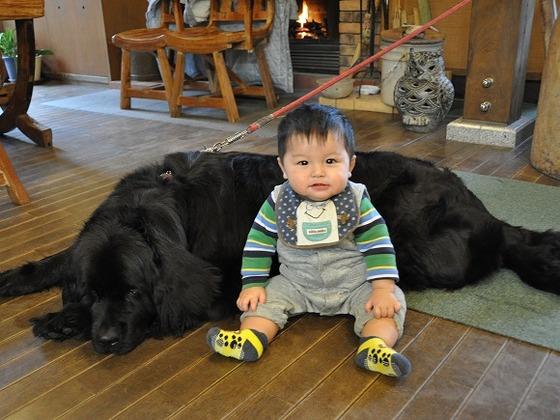 看板犬。大きくて優しいワンちゃんです