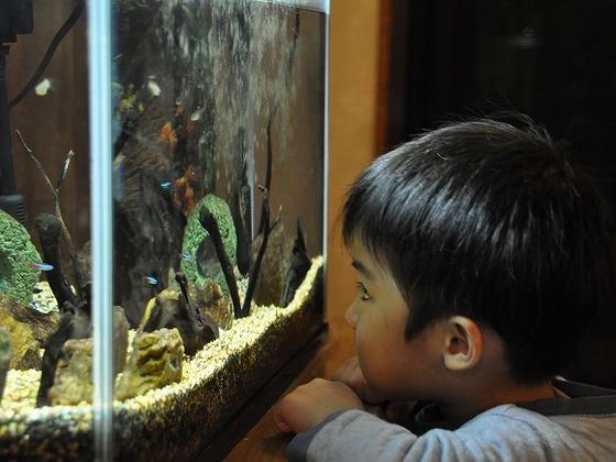 館内各所に魚の泳ぐ水槽がございます