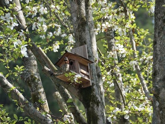 自然に囲まれ、たくさんの野鳥の姿も見ることができます。