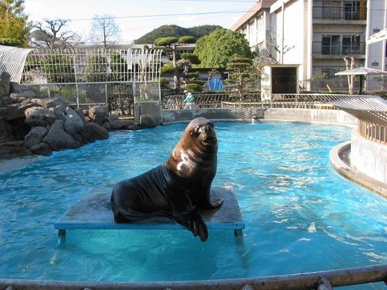 ホテルから徒歩1分のミニ水族館「渋川マリン水族館」
