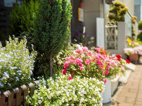 季節のお花が玄関で皆様をお出迎えします。