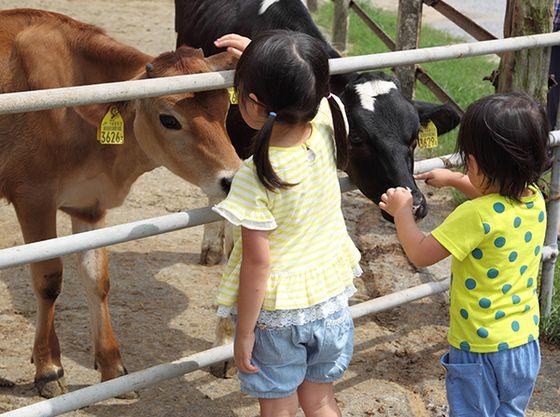 ホテルよりお車で約50分の「マザー牧場」沢山の動物と触れ合うことができます。