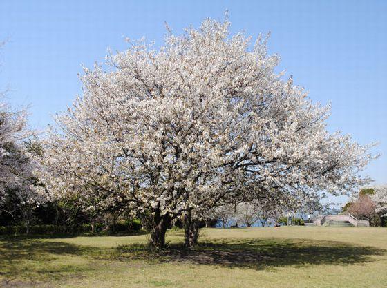 大房岬は四季折々の花々を見ることができます。