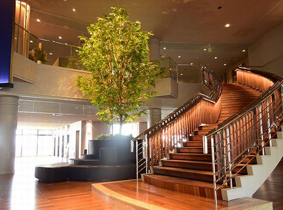 ロビー中央には「トリネコの木」木のぬくもりを存分に感じていただけるロビーとなっております。