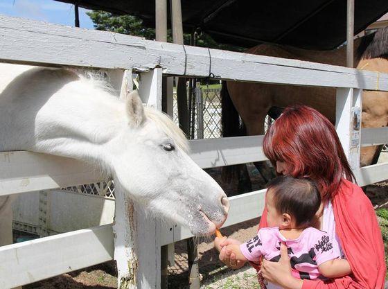 ホースパークは体験乗馬や餌やり体験ができます。ライセンスの取得も出来ます。