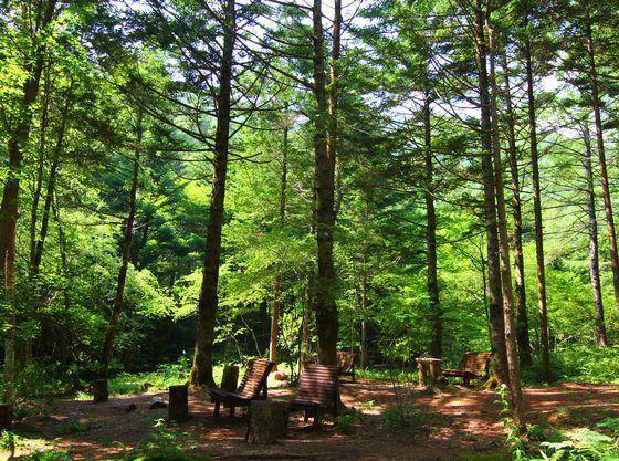 緑に囲まれた阿智村は自然の宝庫!大自然の中で森林浴♪