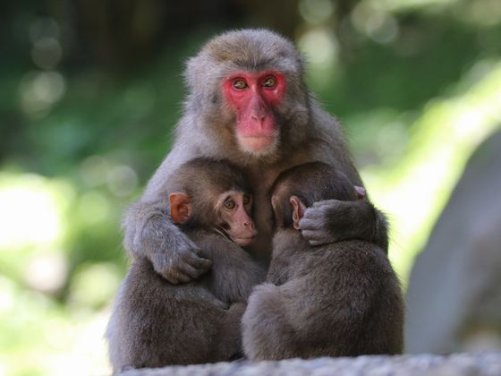 高崎山自然動物園(車で約20分)