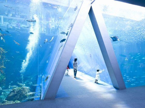 生命の尊さ自然保護の大切さを学べる環境型水族館です。