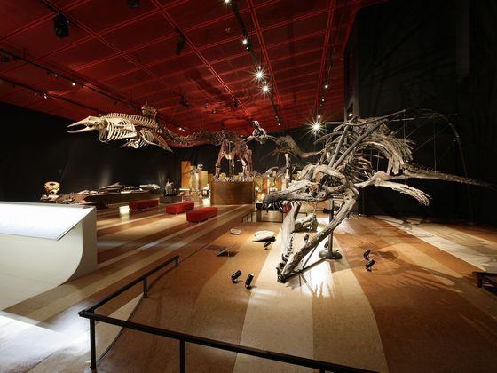 常磐炭田の採掘の歴史と、市内で発掘された化石を展示。