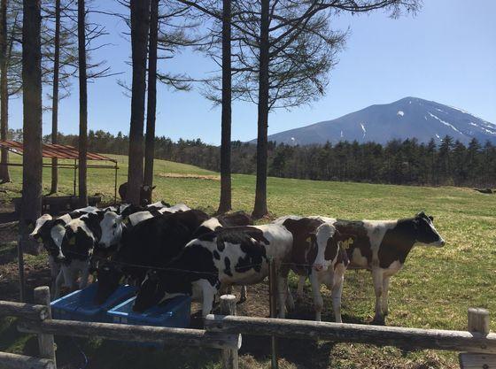 近隣では歌謡曲「丘を越えて」のモデルとなった浅間牧場が人気
