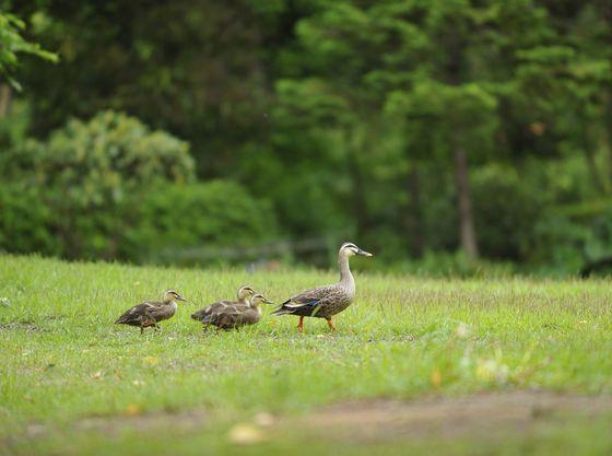 【庭園(一例)】芝生の庭園は赤ちゃんとのお散歩にぴったり