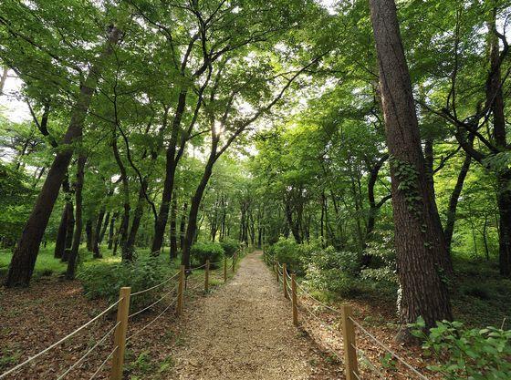 【遊歩道(一例)】季節によって変化する昭和の森は、何度来ても新しい発見があります