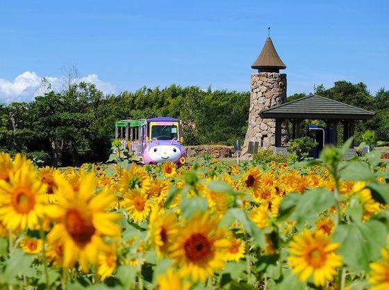 お花畑&収穫体験&コアラに会える!【イングランドの丘】