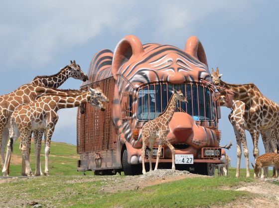 九州自然動物公園「アフリカンサファリ」お車で約30分
