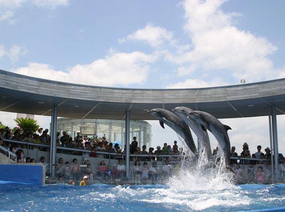 ショーが人気の水族館「うみたまご」お車で約40分