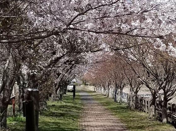 ホテル前から箒川に沿って塩原温泉街まで通じる遊歩道(春)