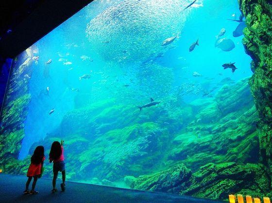 仙台うみの杜水族館。蘭亭より車で約45分。