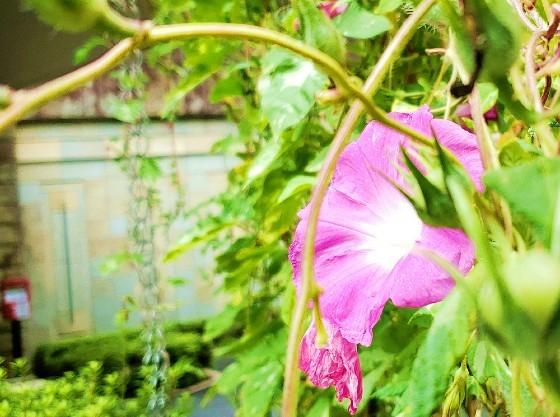玄関前にスタッフで花を植える活動も行っています