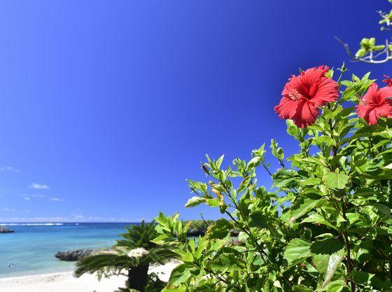 リゾートには年中南国の花々が咲いています