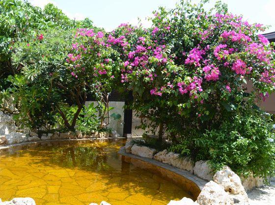 ブーゲンビリアの花の下の露天風呂