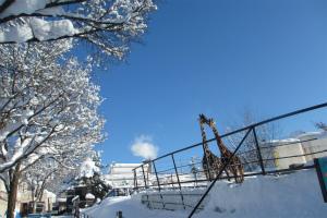 ペンギンの散歩は3月中旬まで【冬期営業は4月7日まで!旭山動物園(北海道)】