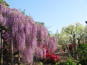 春といえば花見!桜に菜の花、チューリップ。子どもにカメラを持たせてみよう