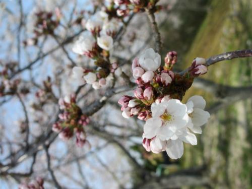 3歳からの旅育~春編~お花見・絶景・列車旅。家族やママ友と子連れでGO!
