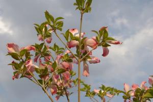 都会のオアシス。子どもとのんびり春の休日~大阪市立長居植物園