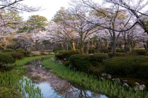 北陸新幹線でぐっと身近に!桜が似合う街「金沢」