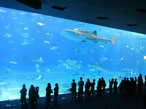 水族館では夏限定の体験も。子どもは野生のイルカと対面してニッコリ【沖縄・九州】