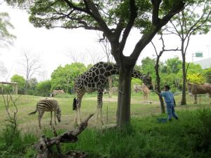 街中にある憩いの場。子どもも大人も楽しめる「天王寺動物園」(大阪府)