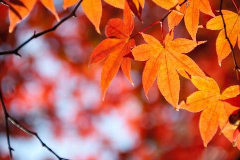 親子で神戸アートイベント、京都・奈良で紅葉を楽しむ【関西地方】